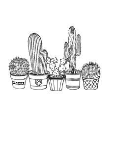 Cactus 48 medium