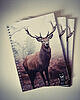 Deer notepad 6325 small