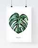 Monstera poster 6812 small