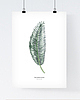 Monstera poster 438 small