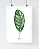 Monstera poster 436 small