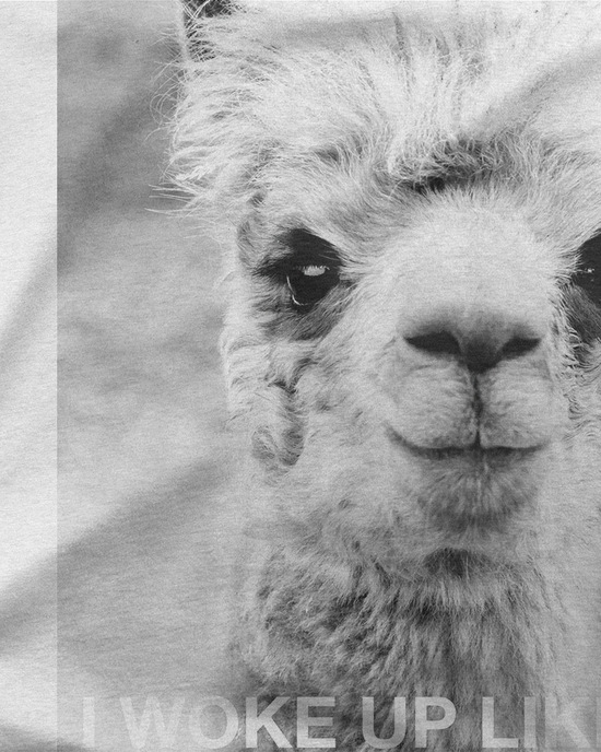 I woke up like this alpaca